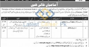 Ministry-of-National-Food-Security-and-Research-Islamabad-Jobs-19-Nov-2019